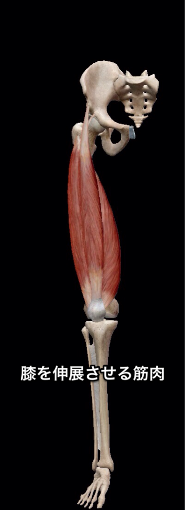 膝伸展させる
