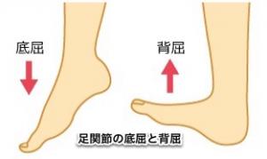 足関節の底屈と背屈