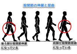 股関節、歩行