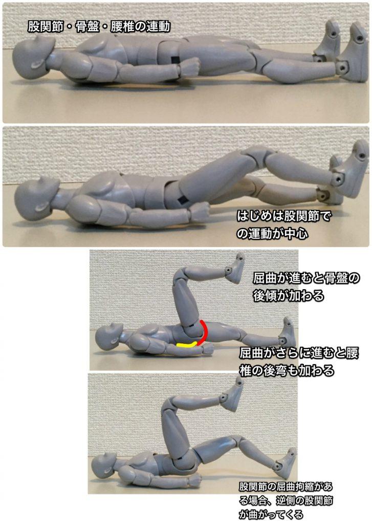 new_股関節骨盤腰椎の連動